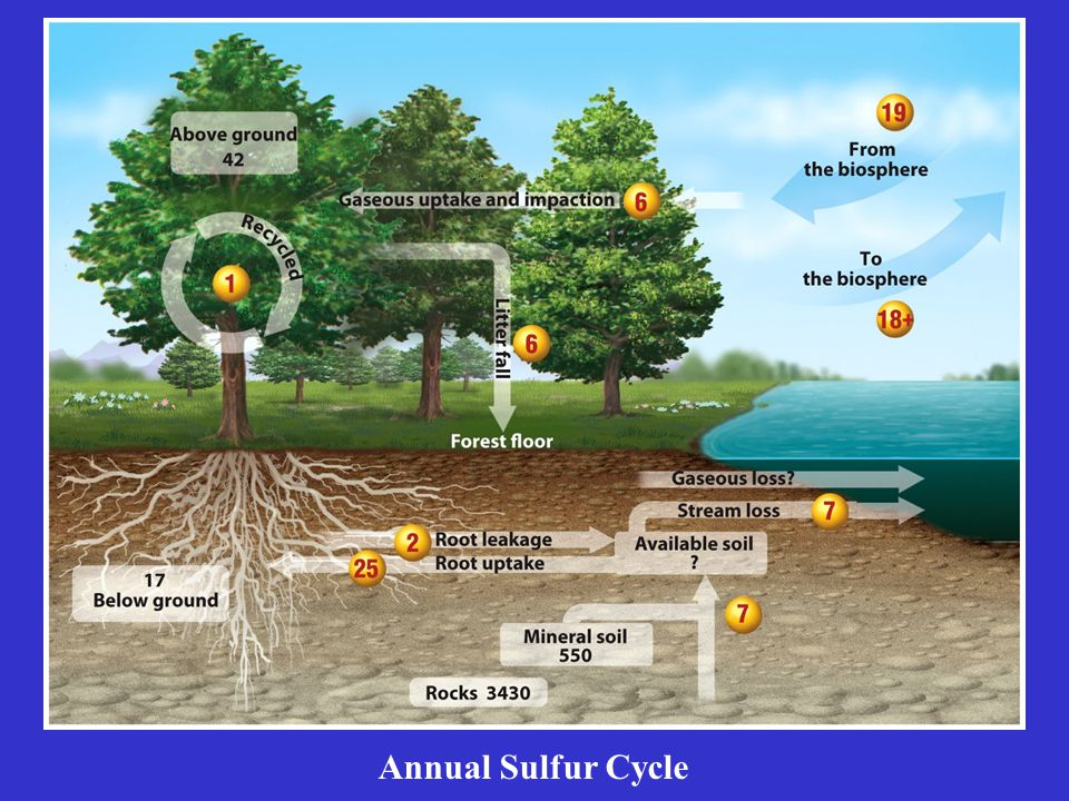 Annual Sulfur Cycle