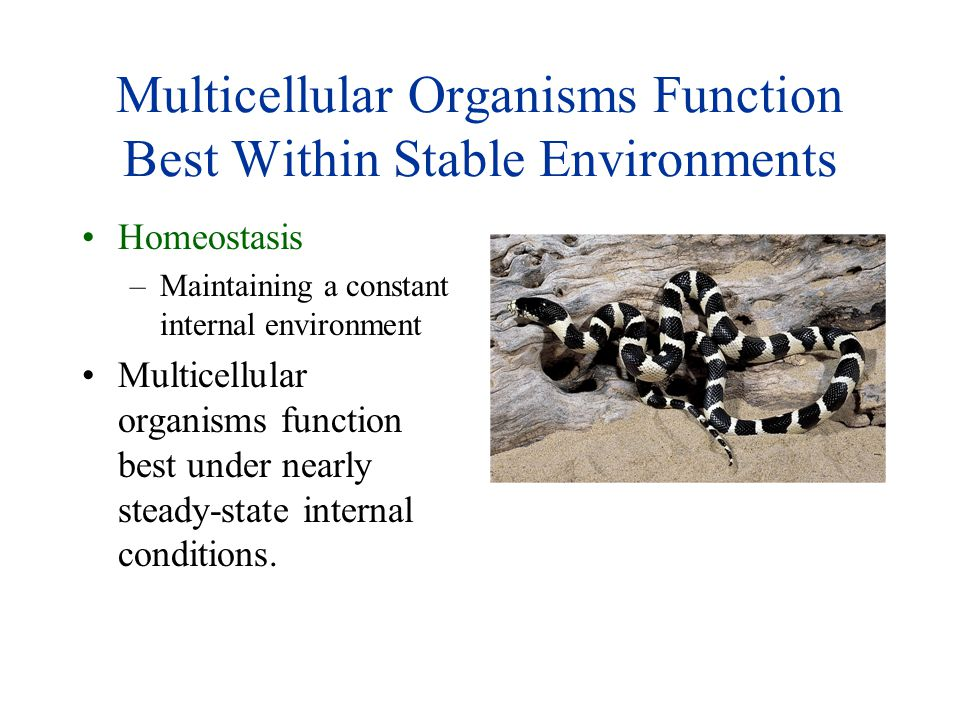 Multicellular Organisms Function Best Within Stable Environments