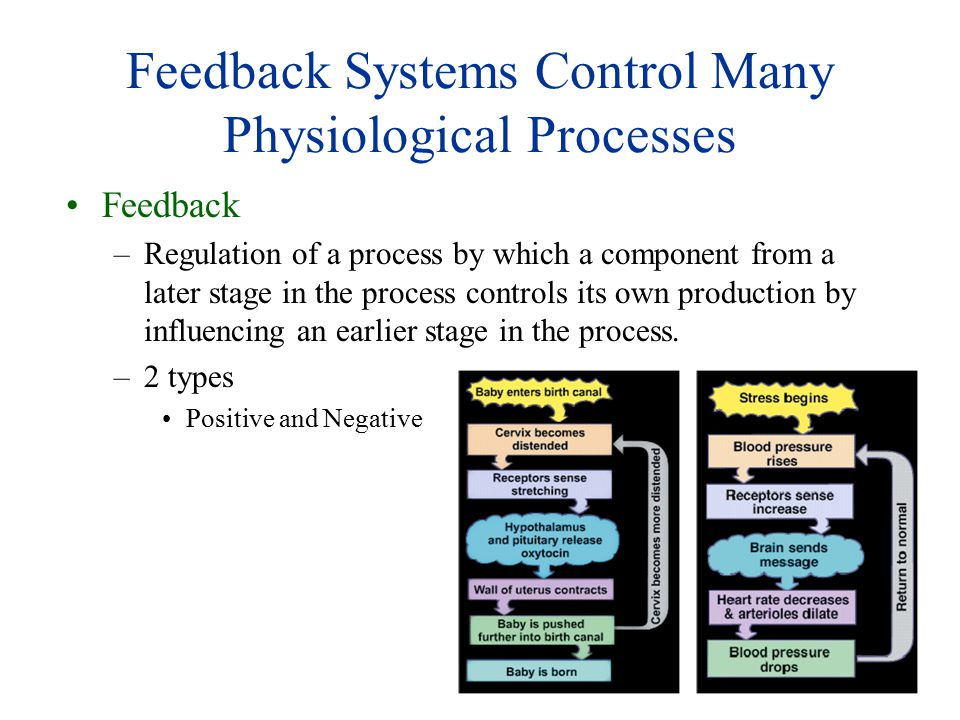 Feedback Systems Control Many Physiological Processes