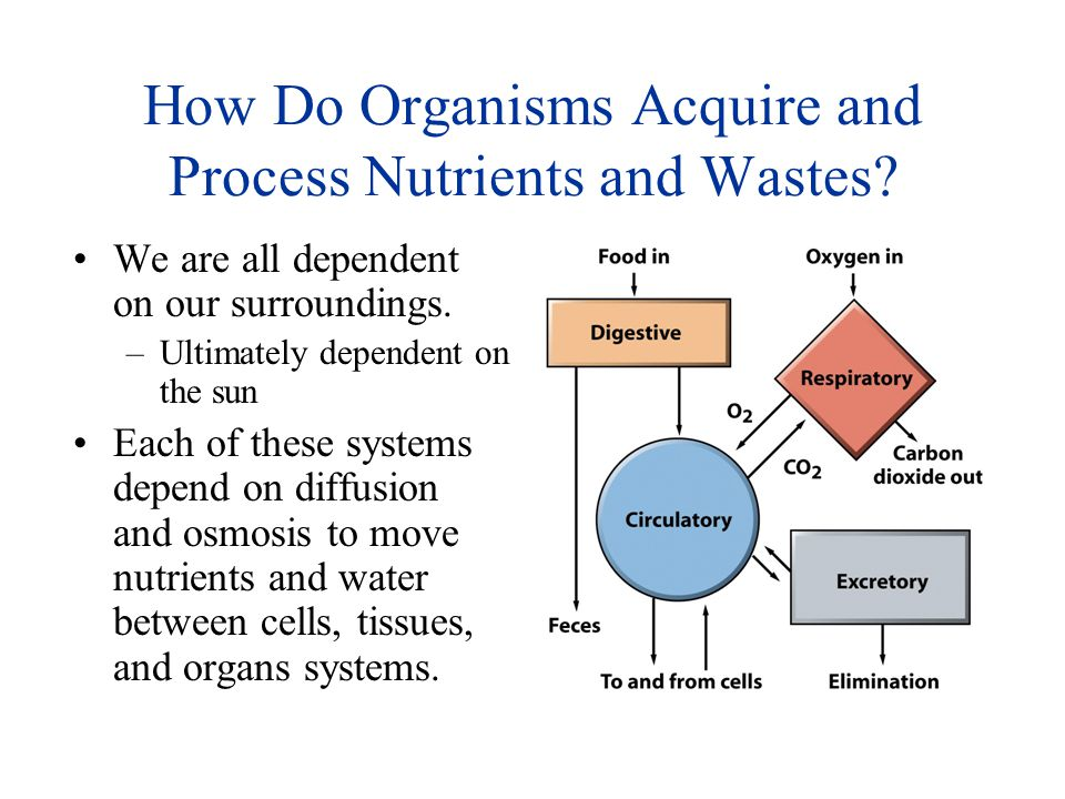 How Do Organisms Acquire and Process Nutrients and Wastes