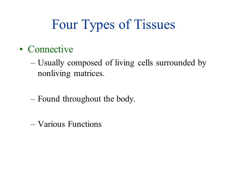 Four Types of Tissues Connective