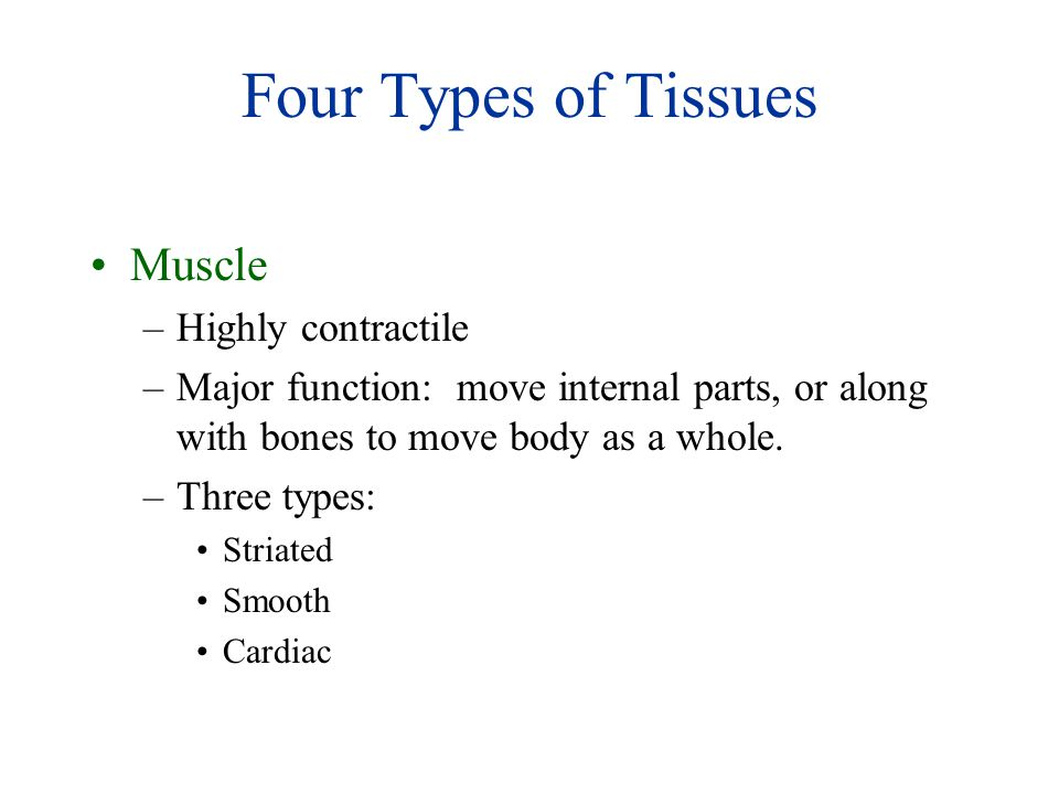 Four Types of Tissues Muscle Highly contractile