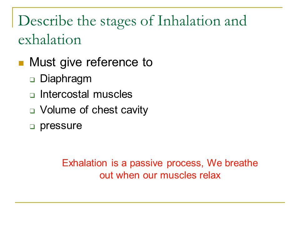 Describe the stages of Inhalation and exhalation