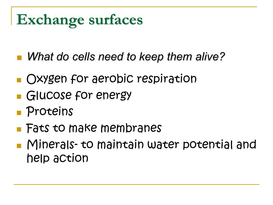 Exchange surfaces What do cells need to keep them alive