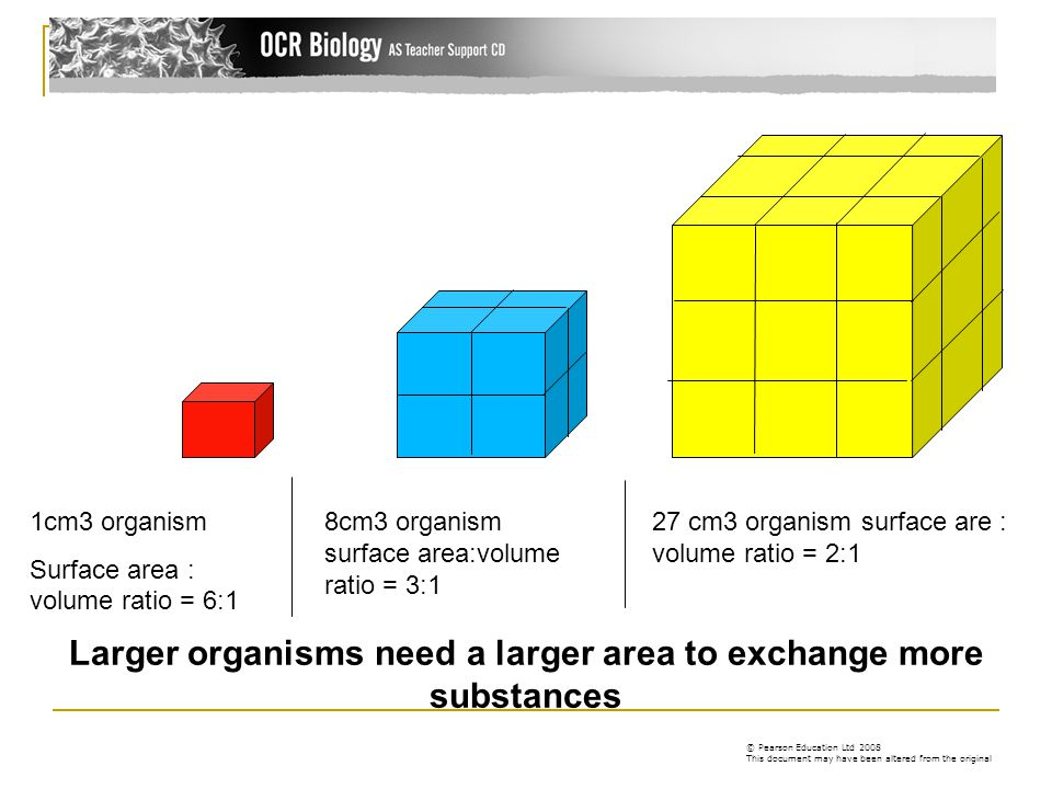 Larger organisms need a larger area to exchange more substances