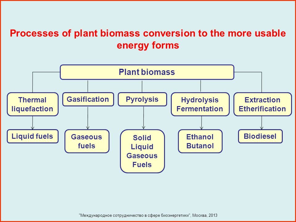 Processes of plant biomass conversion to the more usable energy forms