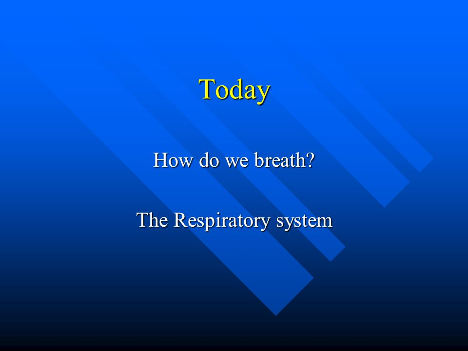 How do we breath The Respiratory system