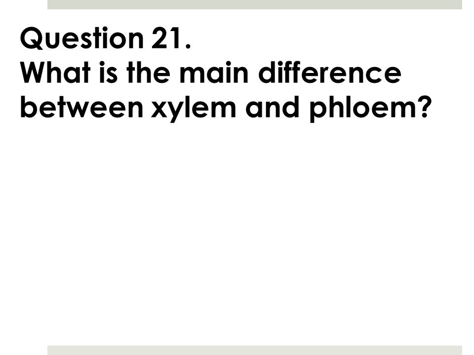Question 21. What is the main difference between xylem and phloem