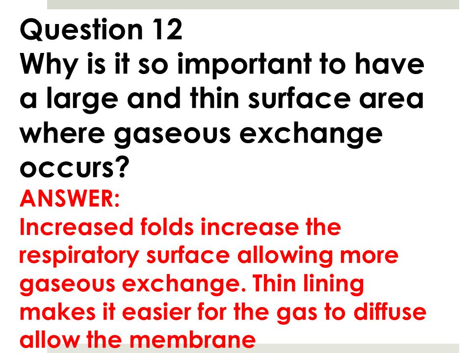 Question 12 Why is it so important to have a large and thin surface area where gaseous exchange occurs