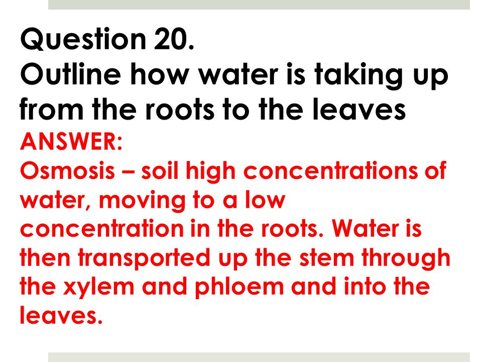 Outline how water is taking up from the roots to the leaves