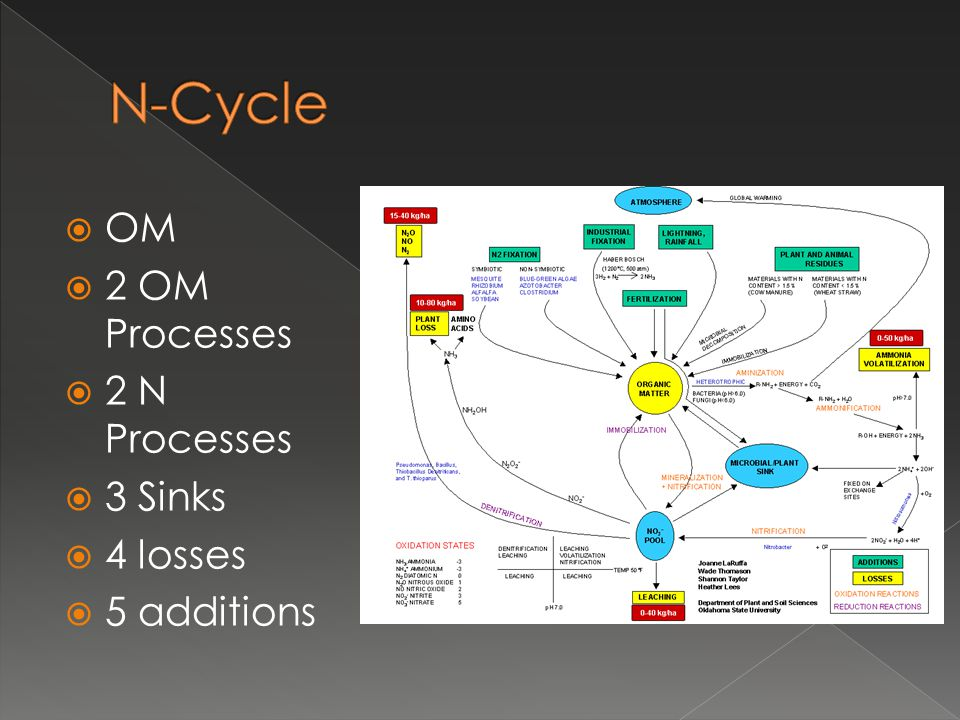 N-Cycle OM 2 OM Processes 2 N Processes 3 Sinks 4 losses 5 additions