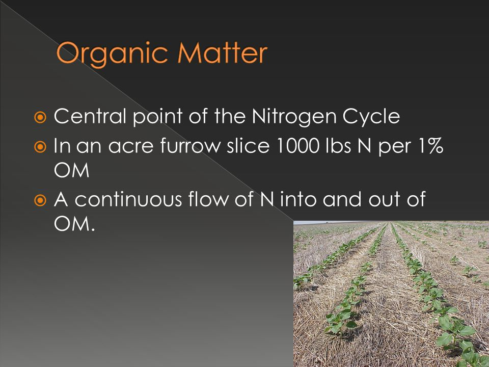 Organic Matter Central point of the Nitrogen Cycle