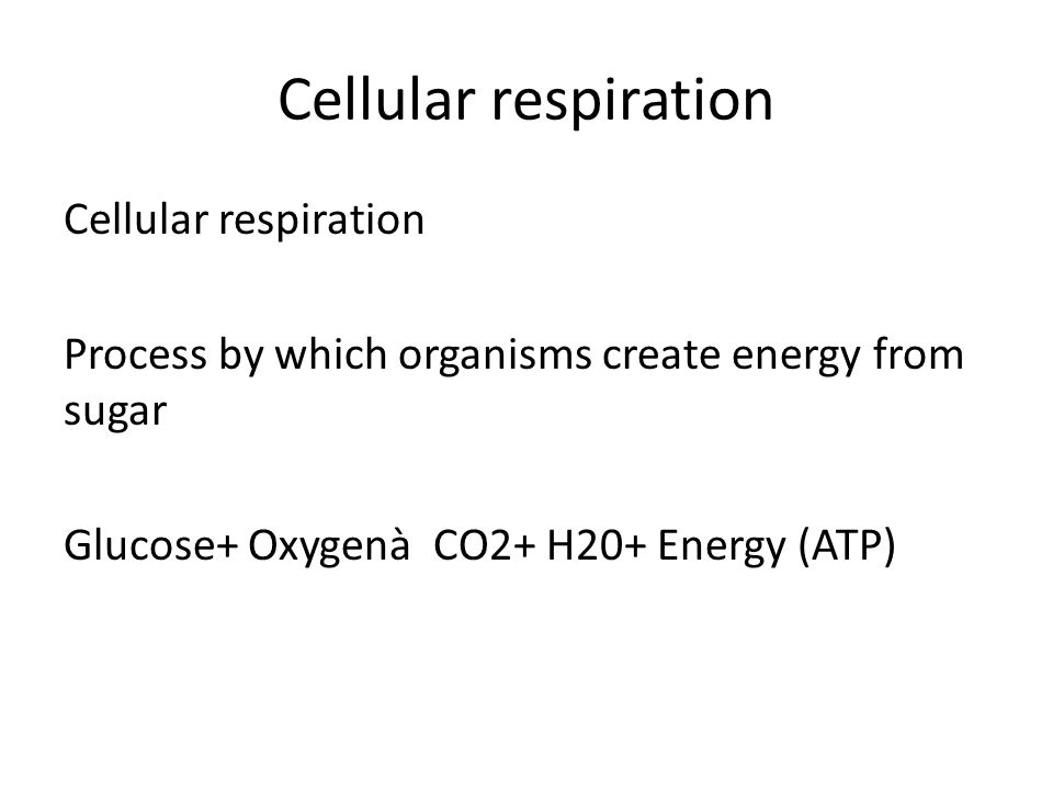 Cellular respiration Cellular respiration Process by which organisms create energy from sugar Glucose+ Oxygenà CO2+ H20+ Energy (ATP)