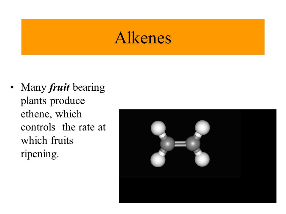 Alkenes Many fruit bearing plants produce ethene, which controls the rate at which fruits ripening.