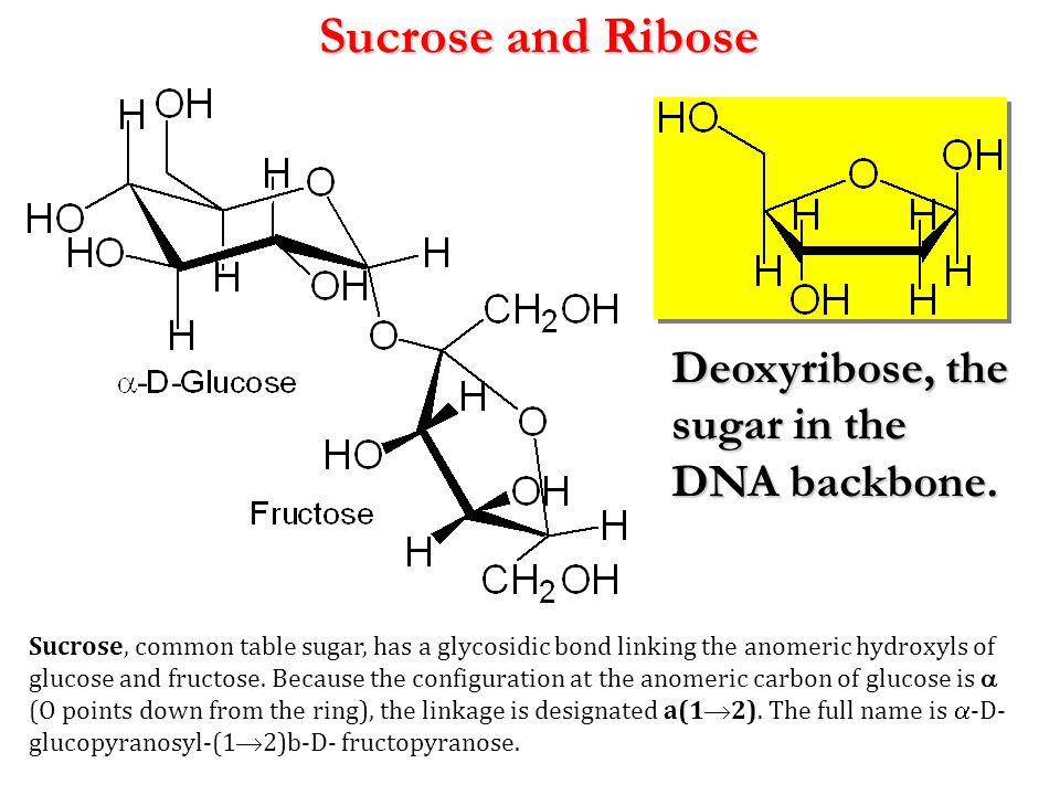 Sucrose and Ribose Deoxyribose, the sugar in the DNA backbone.