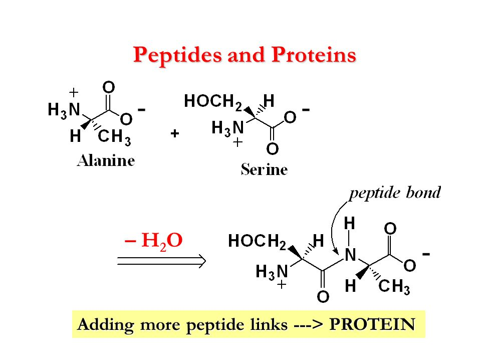 - - - Peptides and Proteins – H2O