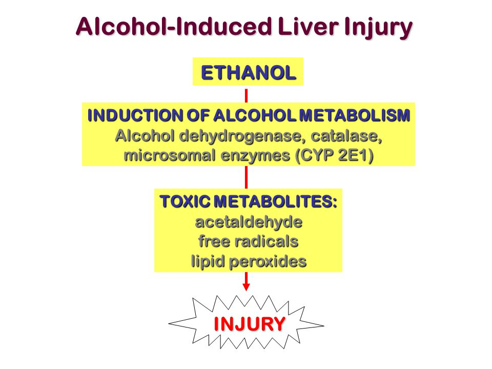 Alcohol-Induced Liver Injury INDUCTION OF ALCOHOL METABOLISM