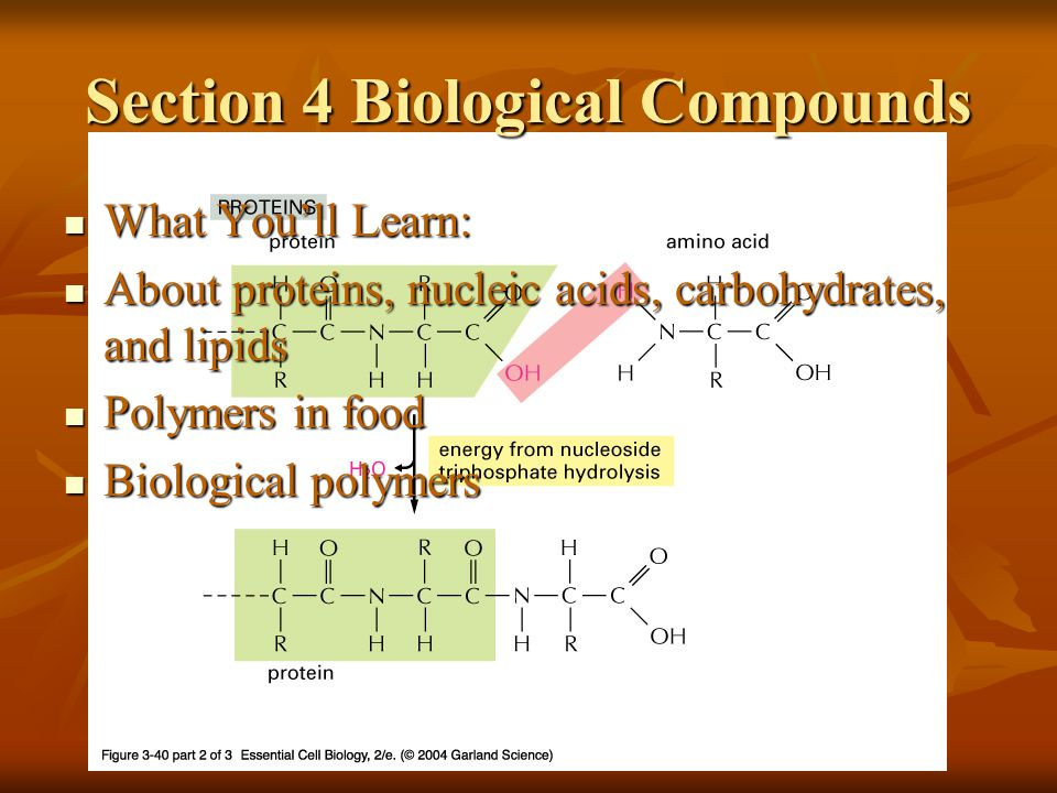 Section 4 Biological Compounds