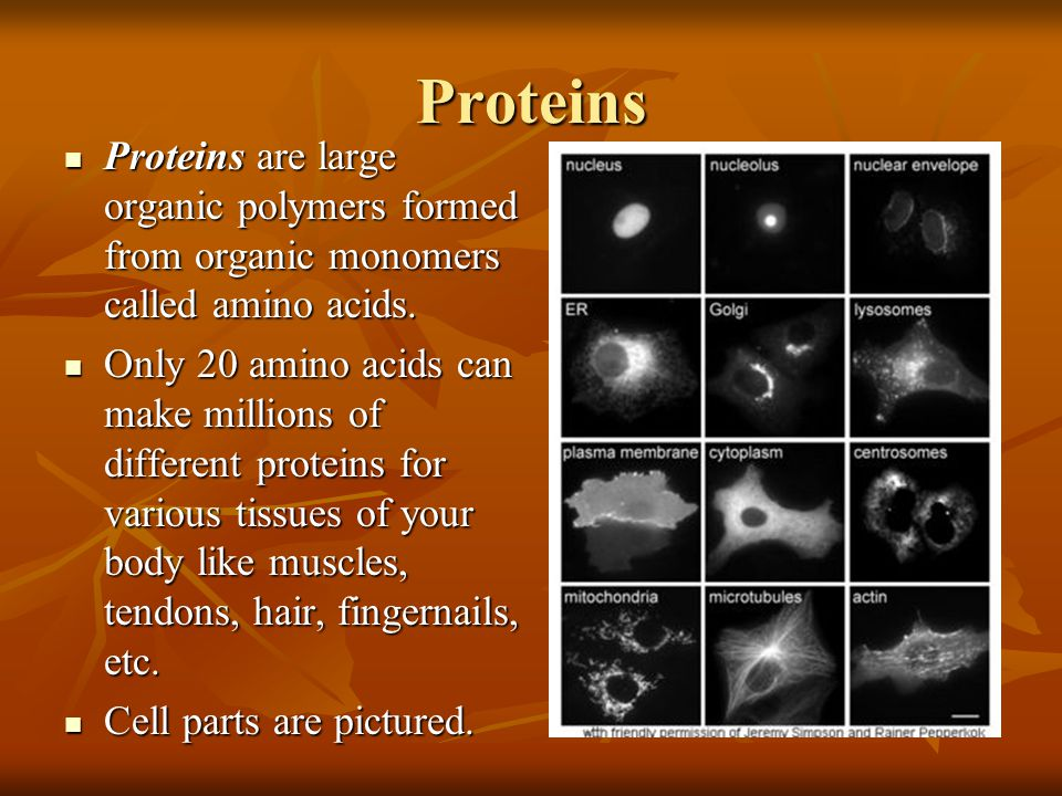 Proteins Proteins are large organic polymers formed from organic monomers called amino acids.