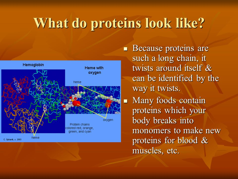 What do proteins look like