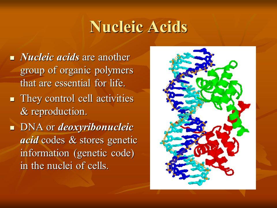 Nucleic Acids Nucleic acids are another group of organic polymers that are essential for life. They control cell activities & reproduction.