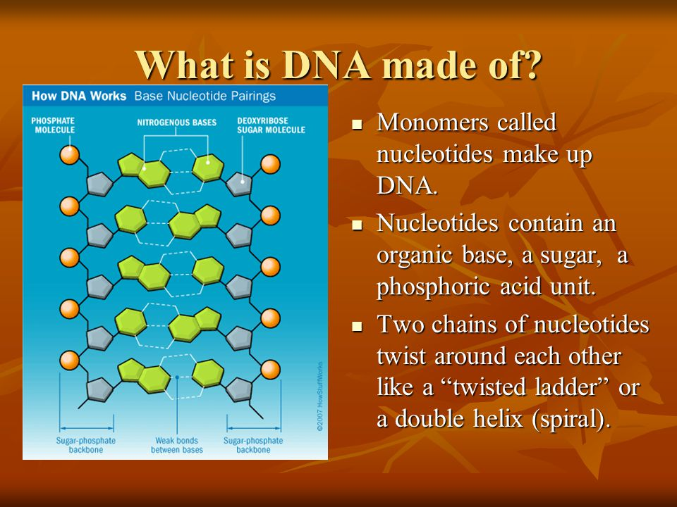 What is DNA made of Monomers called nucleotides make up DNA.