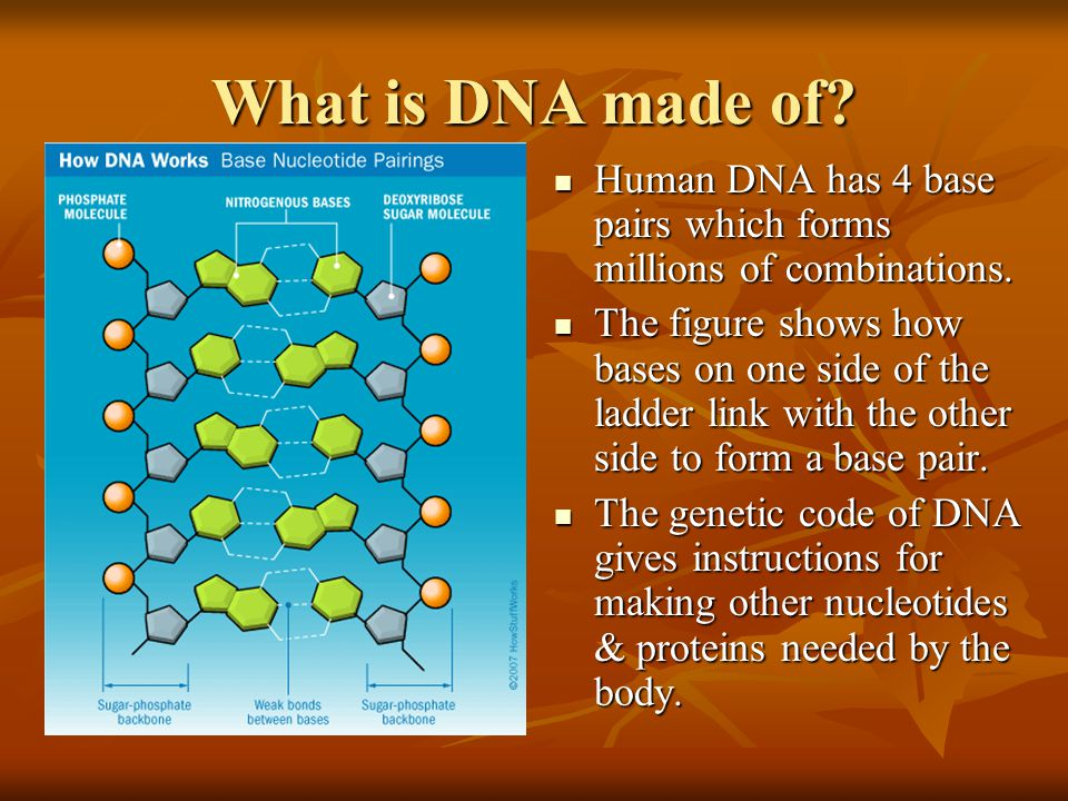 What is DNA made of Human DNA has 4 base pairs which forms millions of combinations.