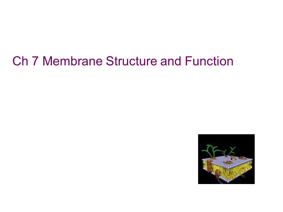 Ch 7 Membrane Structure and Function