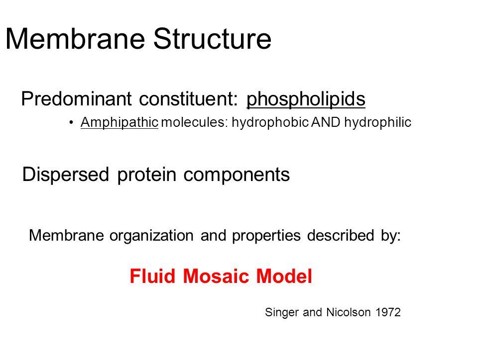 Membrane Structure Predominant constituent: phospholipids