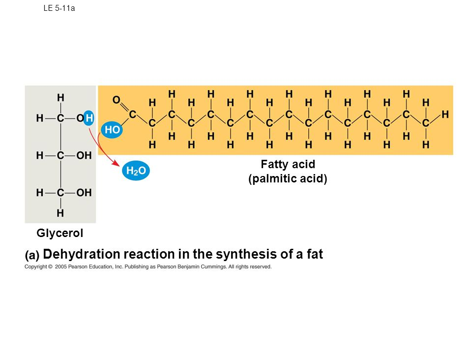 Dehydration reaction in the synthesis of a fat