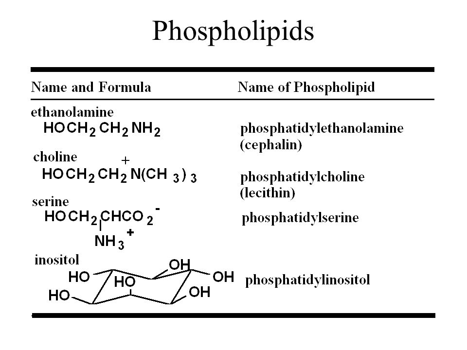 Phospholipids 46 46