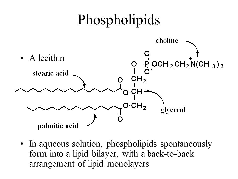 Phospholipids A lecithin