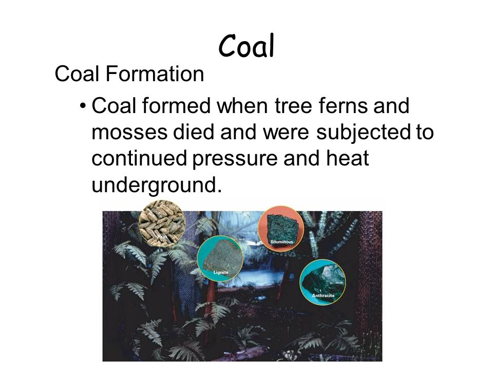 22.5 Coal. Coal Formation. Coal formed when tree ferns and mosses died and were subjected to continued pressure and heat underground.