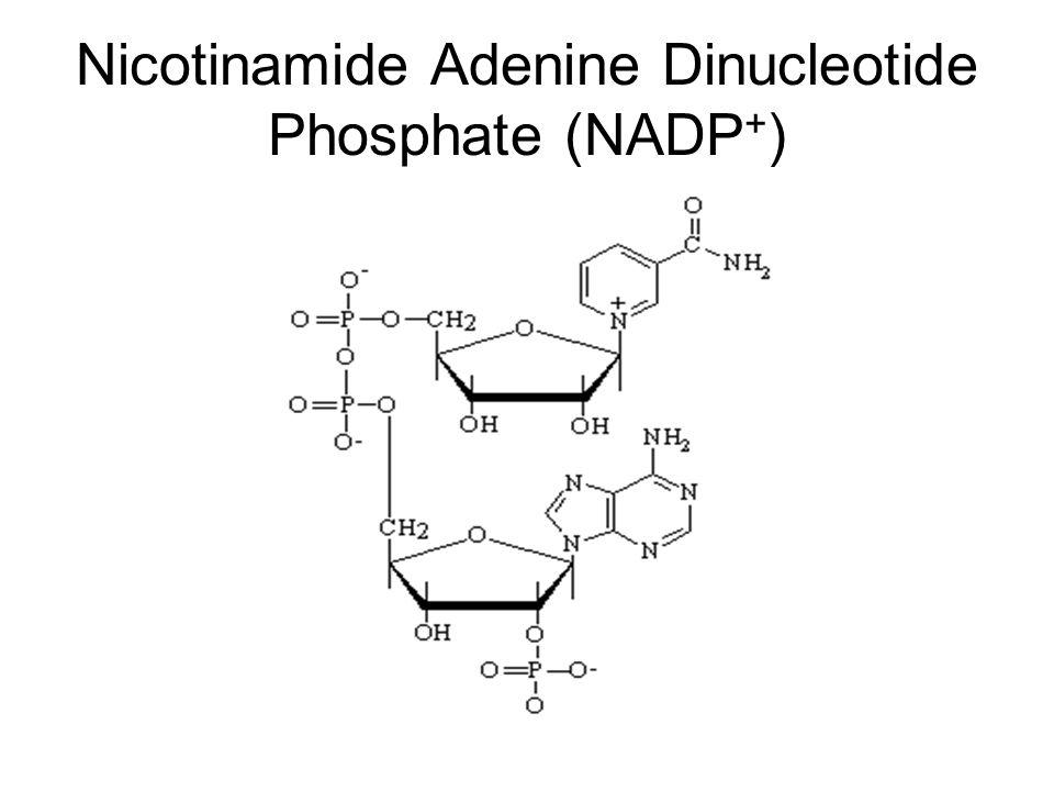 Nicotinamide Adenine Dinucleotide Phosphate (NADP+)