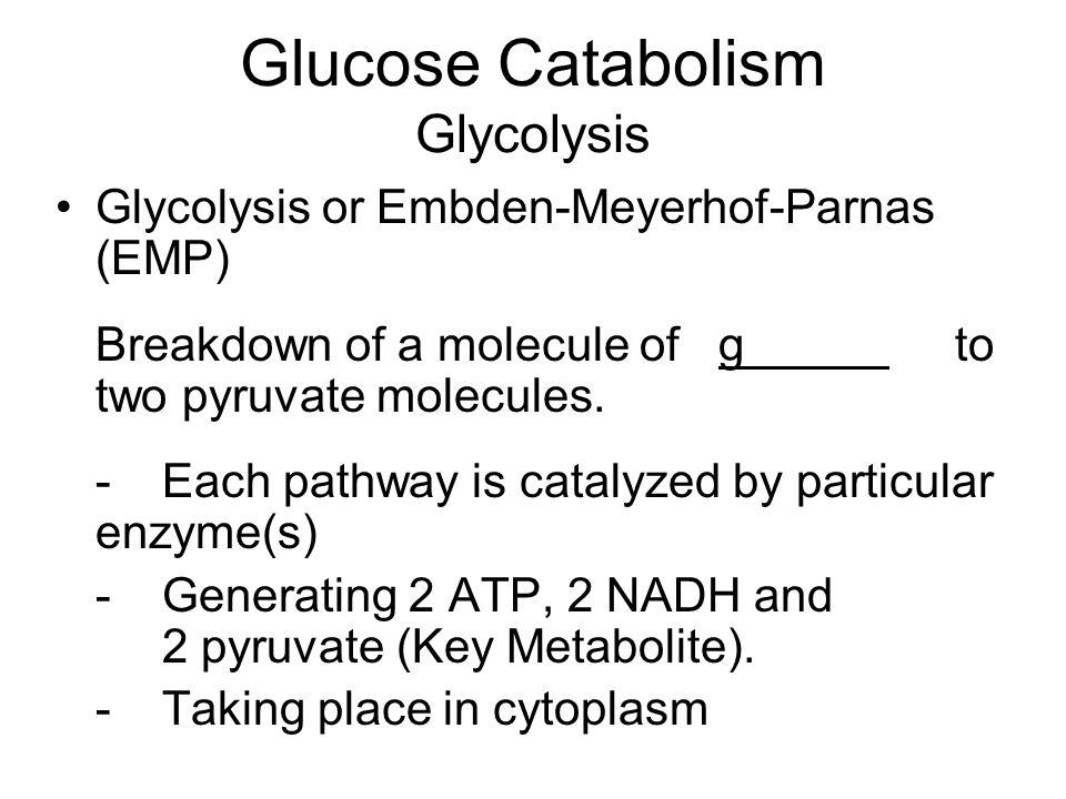 Glucose Catabolism Glycolysis