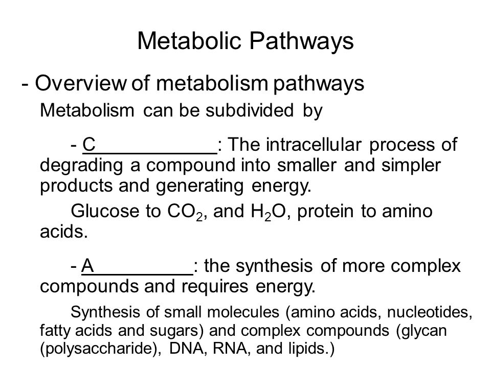 Metabolic Pathways - Overview of metabolism pathways