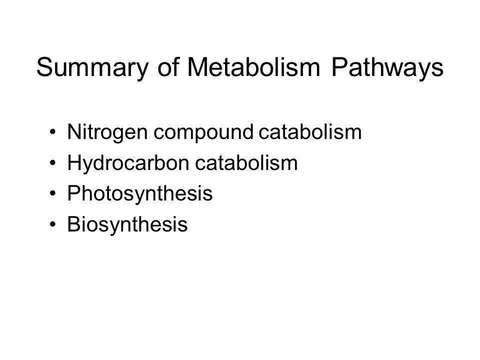 Summary of Metabolism Pathways