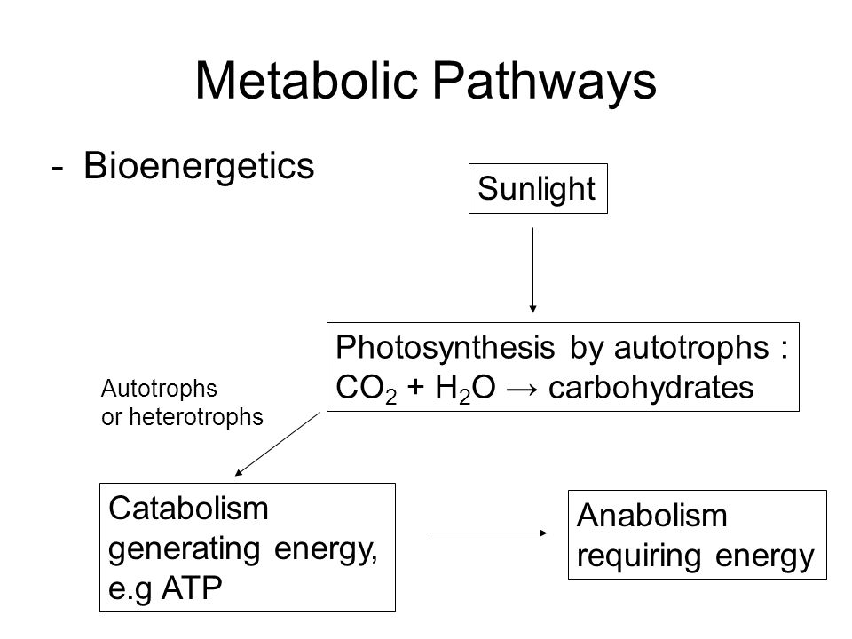 Metabolic Pathways Bioenergetics Sunlight
