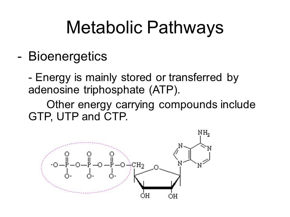 Metabolic Pathways Bioenergetics