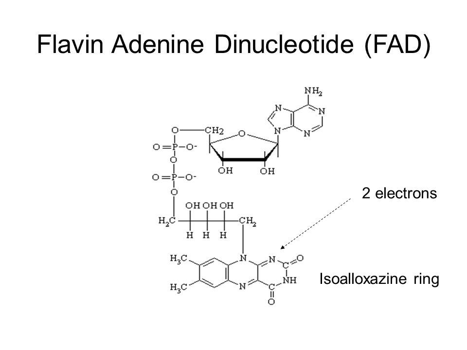 Flavin Adenine Dinucleotide (FAD)