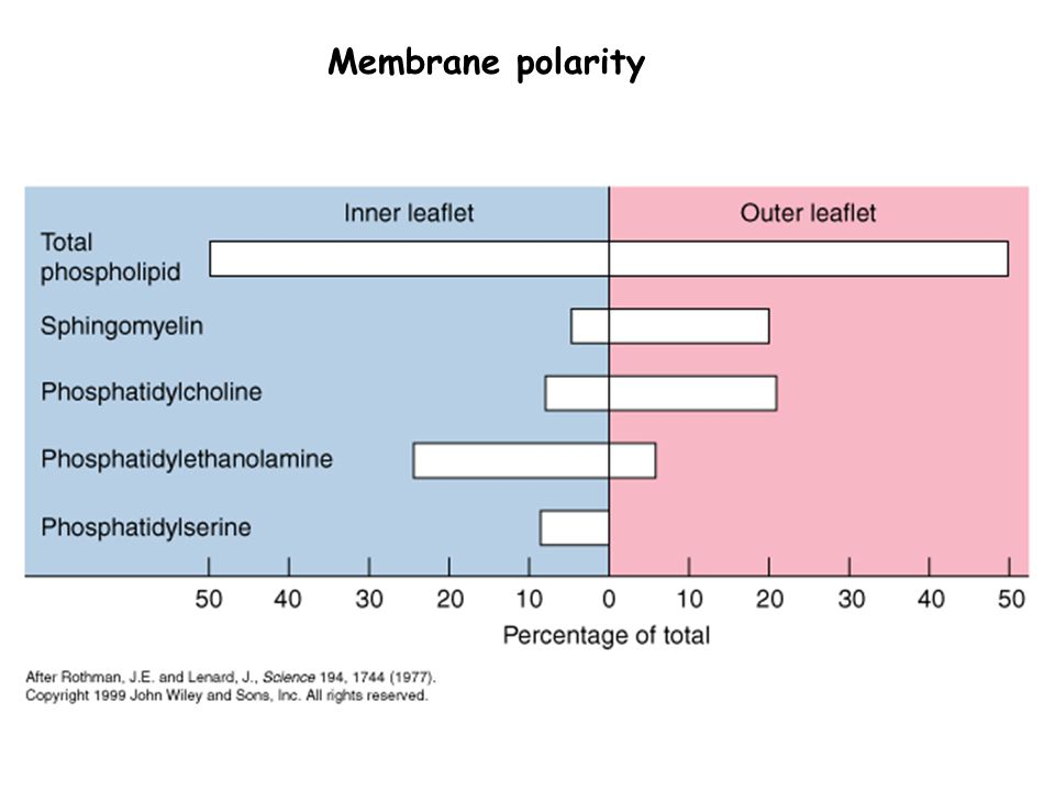 Membrane polarity