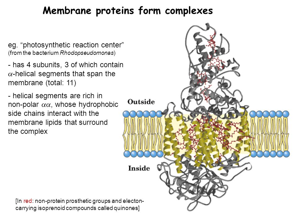 Membrane proteins form complexes