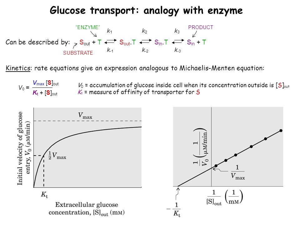 Glucose transport: analogy with enzyme
