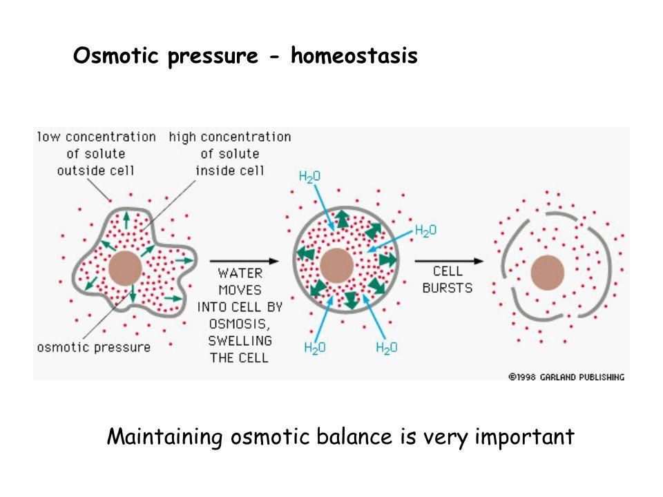 Osmotic pressure - homeostasis