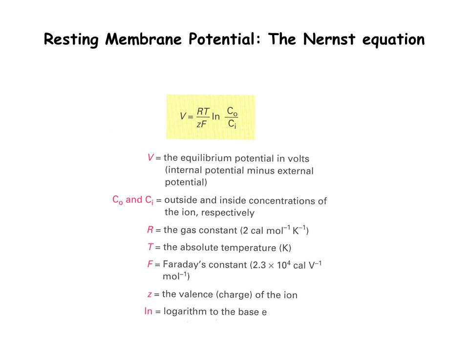 Resting Membrane Potential: The Nernst equation