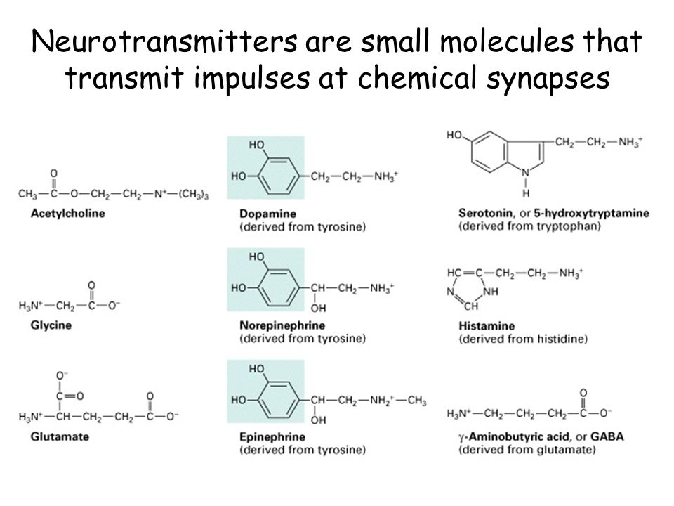 Neurotransmitters are small molecules that transmit impulses at chemical synapses