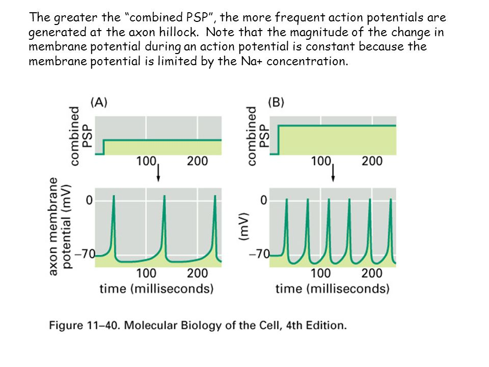 The greater the combined PSP , the more frequent action potentials are generated at the axon hillock.