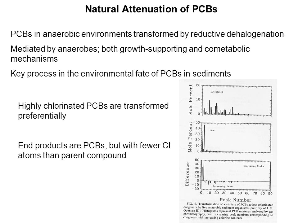 Natural Attenuation of PCBs