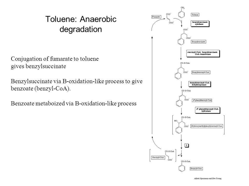 Toluene: Anaerobic degradation
