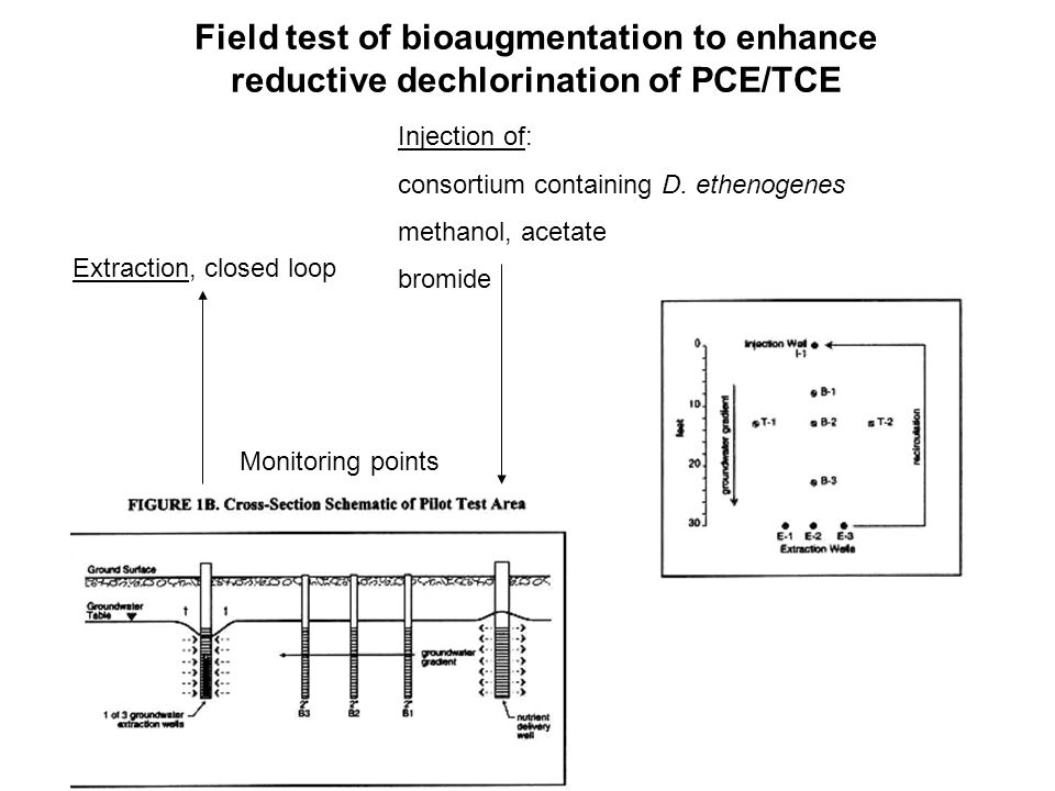 Field test of bioaugmentation to enhance reductive dechlorination of PCE/TCE